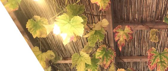 Natuurmatten-Rietmatten-Wilgenmatten-Heidematten-Boomschorsmatten-Bamboematten kopen
